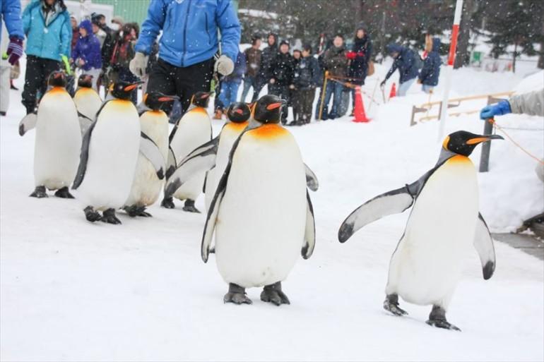 Asahiyama Zoo, Asahikawa City, Hokkaido, Japan