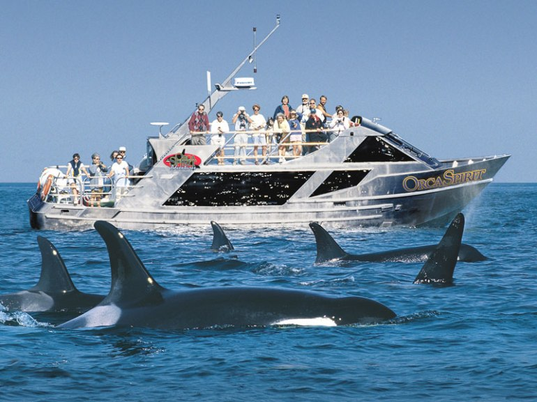 Whale watching, near Victoria, Canada