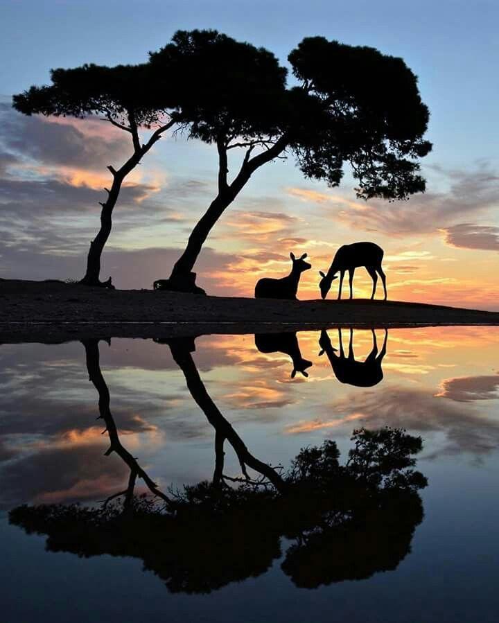 Reflection photo A